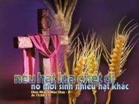 Bài Chia sẻ Tin Mừng Chúa Nhật V Mùa Chay Năm B - Lm An-tôn Nguyễn Văn Độ