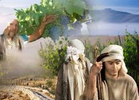 Các Bài Chú Giải và Suy Niệm Tin Mừng Chúa Nhật XXVI thường niên năm A